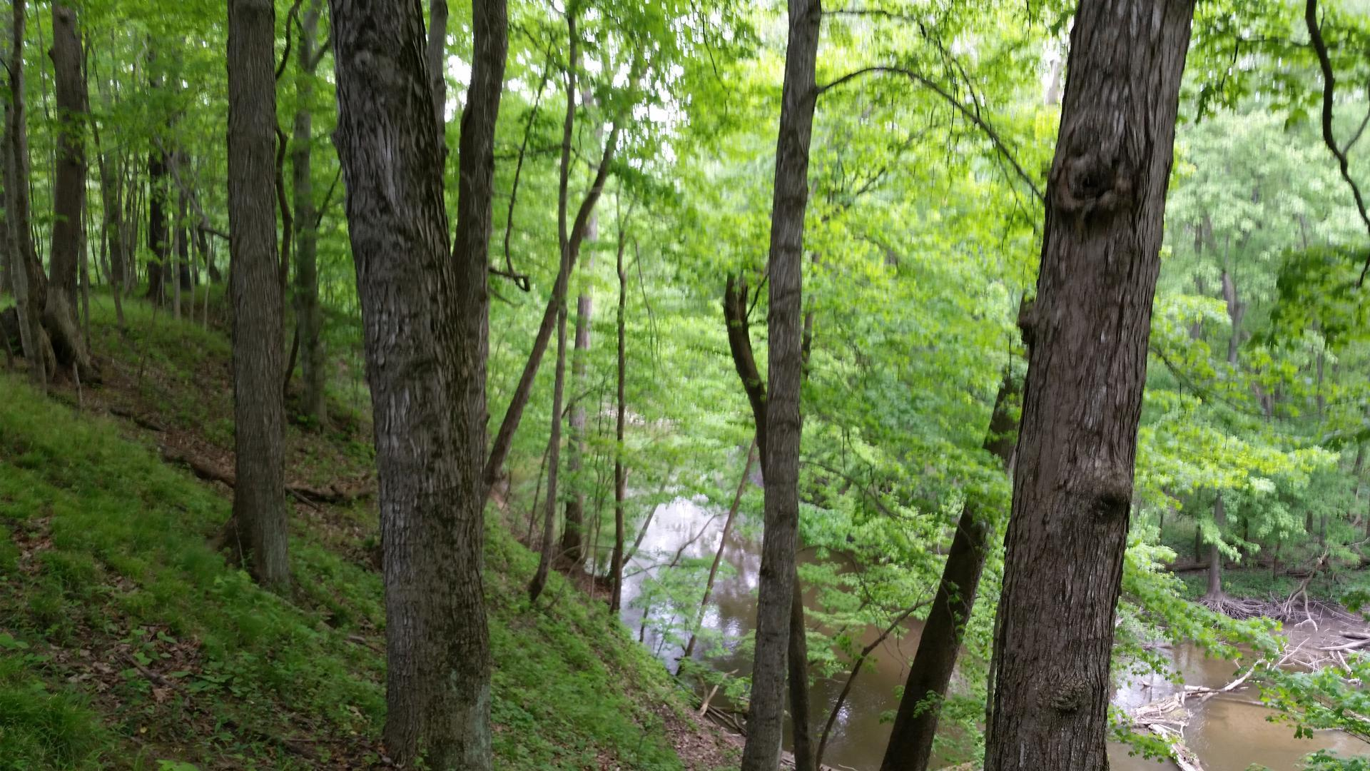 McCulley-Bastian Nature Sanctuary
