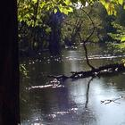 Thornapple River Nature Sanctuary
