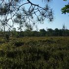 Leatherleaf Jack Pine Bog Nature Sanctuary